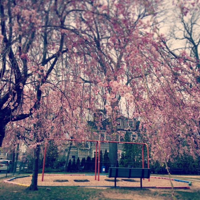 子供とよく行く公園