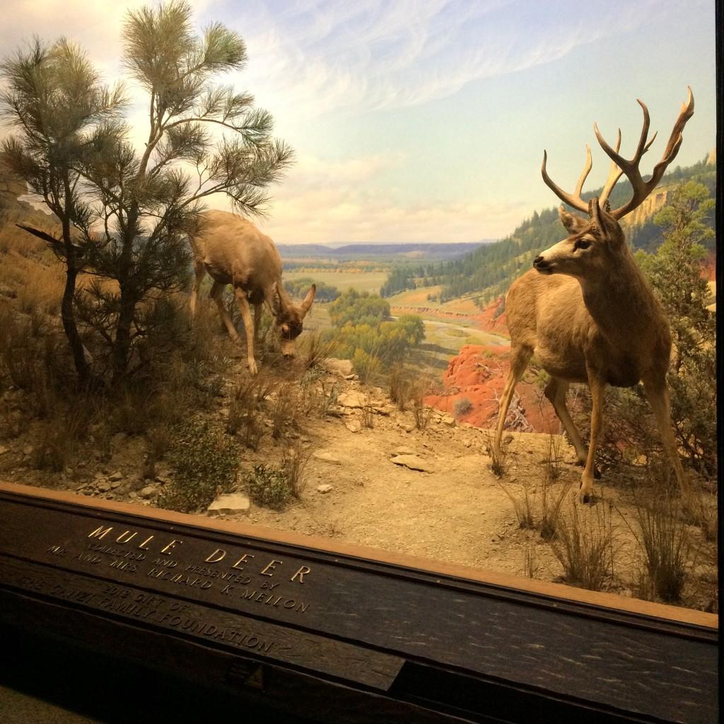 大きいガラスの先に沢山の動物で見ていて飽きない