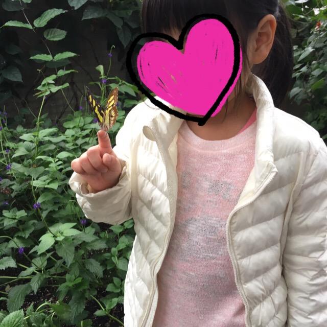 手乗り蝶々